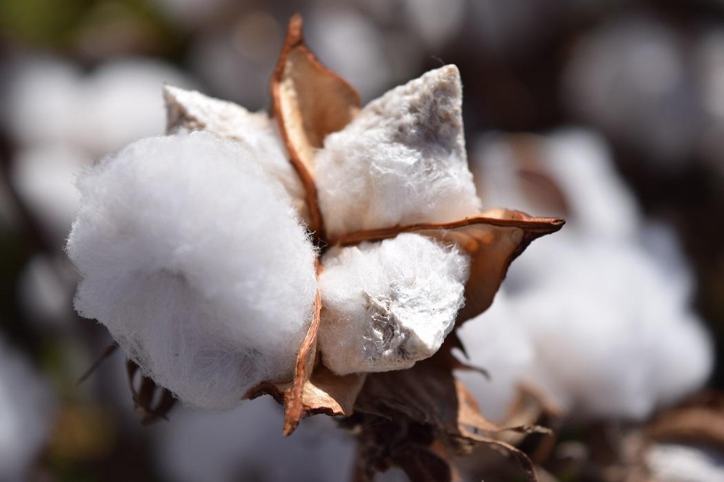 綿,メリット,デメリット,素材